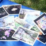 EMS greeting cards, made of student photographs and artwork