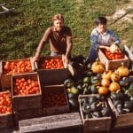 Keith and Ellen Helmuth bringing in part of the market garden tomato and squash harvest, North Hill Farm, 1983.