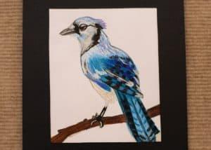 Marissa Clark, 10, Blue Jay, Colored Pencil