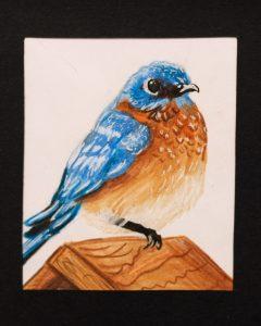 Marissa Clark, 10, Eastern Bluebird, Colored Pencil